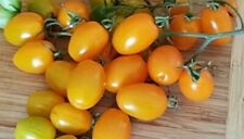 Sunny Gold Cherry Tomato - 50 Seeds - Organic And Super Sweet