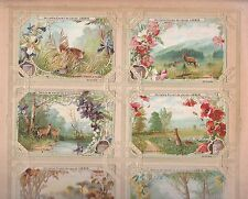 LIEBIG  SET OF  FIELD & FOREST FRENCH TRADE CARDS WITH UNIQUE FRAME