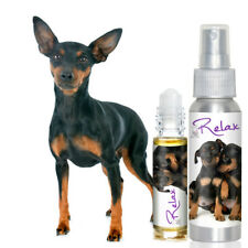 Miniature Pinscher Relax Dog Aromatherapy for Scared, Anxious Min Pins