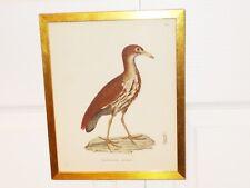 Framed 1800's Antique Bird Print NYCTICORAX goisagi Night Heron PRETRE