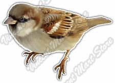 "House Sparrow Brown Small Bird Car Bumper Vinyl Sticker Decal 5""X4"""