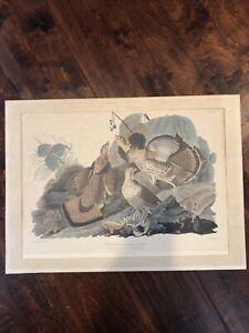 Vintage John Audubon  Matted ART Print RUFFLED GROUSE PLATE XLI No.9