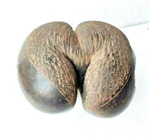 Original Antique Old Rare Double Coco De Mer Seychelles Coconut Nut Seed Kamndal