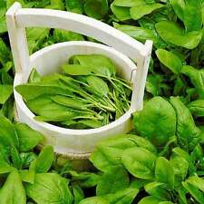 Seeds Spinach  New Zealand - Open Pollinated Organically Grown Heirloom