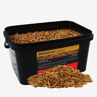 5 Liter Mehlwürmer im Eimer Koifutter Winter Vogelfutter Reptilien Fische Nager