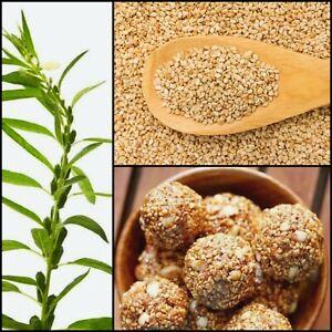 White SESAME SEEDS 100% Pure/Organic Sesamum indicum Ajonjoli Free shipping.