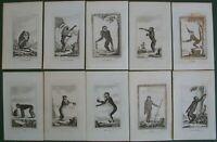 Buffon 10 Antique Prints Monkeys Great Gibbon Coaita Pigmy Howling Monkey 1812