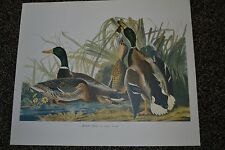 "Vintage Picture Duck Mallard Rustic Cabin Lodge Decor 14 x17"" Audubon Collect 64"