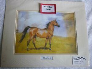 Arab Horse Moubarek, mounted print for framing