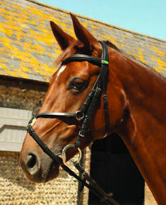 Rhinegold Comfort Mexican Grackle Bridle + Reins - Black Brown - Full Cob