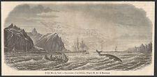 mer du Nord les oiseaux et les baleines   gravure XIXe /B2IN