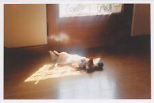 Found 90s PHOTO Little Dog Sleeping in Window Light