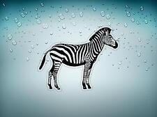 Sticker adesivo adesivi auto tuning zebra animali giungla camera parete r2