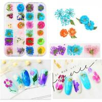 3D Mixed Color Nail Sticker Nail Art   Dry Flowers Decals Manicure Decoration