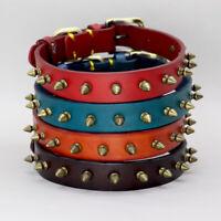Hundehalsband Echtleder Leder Halsband Hund Nietenhalsband Blau Rot Braun XS-XXL
