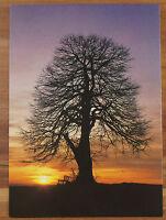 Schöne Ansichtskarte AK - Linde beim Sonnenuntergang Unbeschrieben
