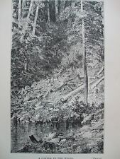 ANTIQUE PRINT 1884 ENGRAVING A CORNER IN THE WOODS USA AMERICAN UNITED STATES
