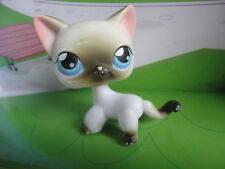 Littlest Pet Shop Siamese Short Hair Kitty LPS 05 5 # 5 CAT Variant Kitten D