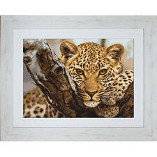 Counted Cross Stitch Kit Luca-S Leopard #B525