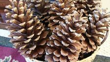 "13 Large Pine cones 5-9 "" high 4""+wide Natural Craft Wreaths Decor Crafts"
