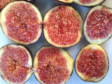 10 Fig Cuttings Mixed - Best Fig Varieties from Malta - See Photos