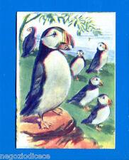ANIMALI - Lampo 1964 - Figurina-Sticker n. 253 - PULCINELLA DI MARE -New