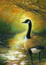 Canada goose sparkling forest stream wildlife limited edition aceo print art