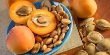 California Grow Bitter Raw Apricot Kernels