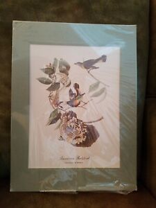 Audubon Book of Birds Print 1940 AMERICAN RESTART