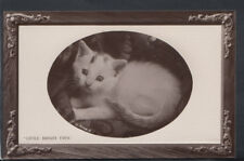 "Animals Postcard - Cats - Kittens - ""Little Bright Eyes""   RS10774"