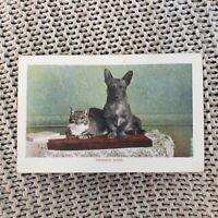 Friends Ever - Dog & Cat - 1905 Postcard