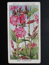 No.4 RED CAMPION - Wild Flowers (Adhesive) - W.D.& H.O.Wills 1936