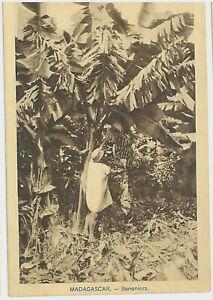 MADAGASCAR 35-Bananiers