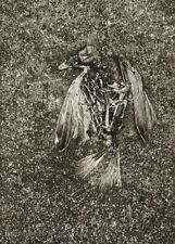 1946 Vintage Josef Sudek Dead Bird Sparrow Still Life Abstract Photo Gravure Art