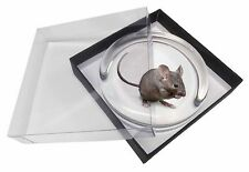 House Mouse Glass Paperweight in Gift Box Christmas Present, AMO-10PW