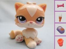 Littlest Pet Shop Orange & Tan Persian CAT #1657 Cream Peach Yellow +1 Free Acce