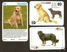 Hovawart Dog Card Look!S! Unique Card Look! Collection
