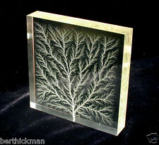 "4x4"" ""Captured Lightning"" Lichtenberg Figure Electron Tree acrylic art sculpture"