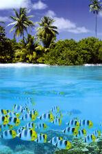 Tropical Scenery II Poster Print, 24x36