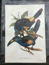 A collection of 12 large Gould & Richter coloured lithographic prints of Toucans