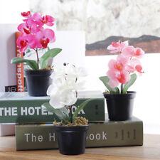 Bonsaï orchidée fleur + pot + diffuseur de parfum avec verre de Murano