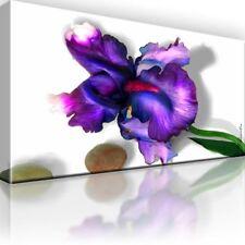 Iris Bild auf Leinwand. Blume. Natur. Gerahmt! XL