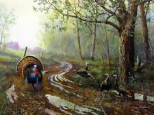 "Spring Fever Wild Turkey  Art Print By Jim Hansel  Image Size 16"" x 12"""