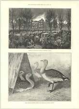 1890 Burning Of Lunatic Asylum Montréal Canada Daedalus Lighthouse Red Sea