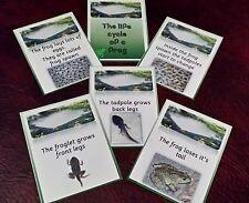 Le cycle de vie d'une grenouille-Affichage visuel cartes EYFS-Classe sujet discussion de groupe