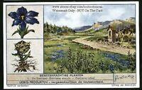 Gentian Flower Plant Medical Herb Drug c70+ Y/O Trade Ad Card