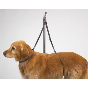 """Dog Puppy Grooming Loop - Nylon Table Harness - Top Performance - 27"""""""