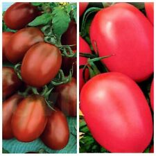 Seeds Tomato De Barao Black Pink Vegetable Organic Heirloom Russian Ukraine