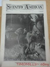 Antique Flamingo Taxidermy Patent Models 1906 Magazine