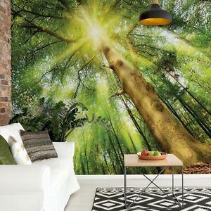 Summer green forest photo wallpaper Non-woven wall mural 312x219cm (123x86in)